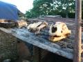 Lion skulls