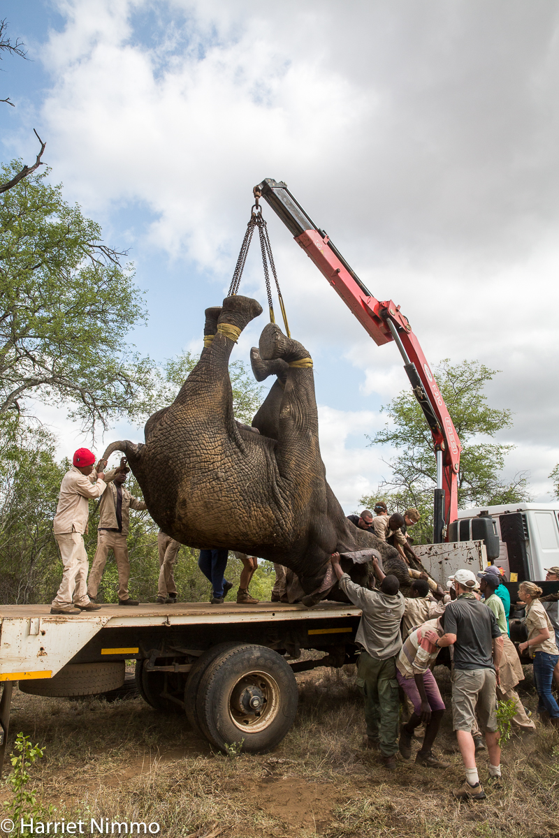 Elephant Rescue loading truck 2