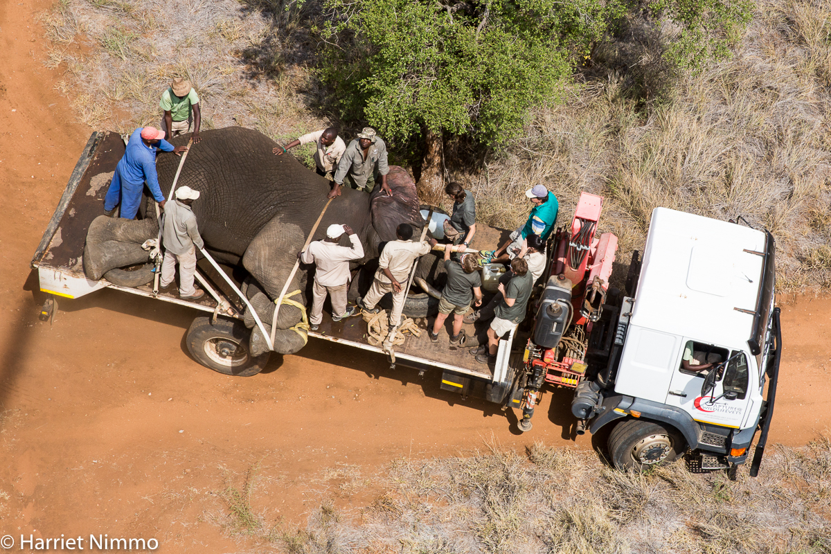 Elephant Rescue truck aerial