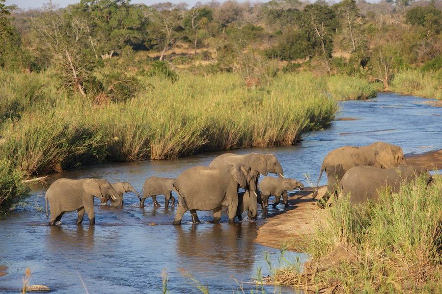 Elephant river crossing