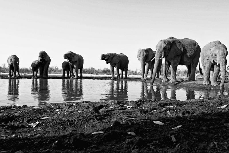 Mashatu Elephants 1