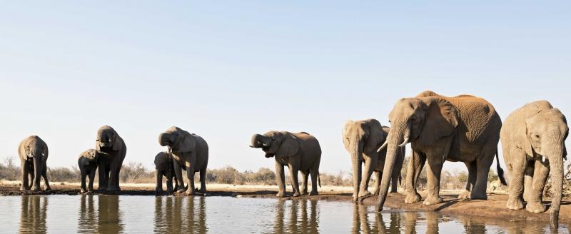 Mashatu Elephants 2