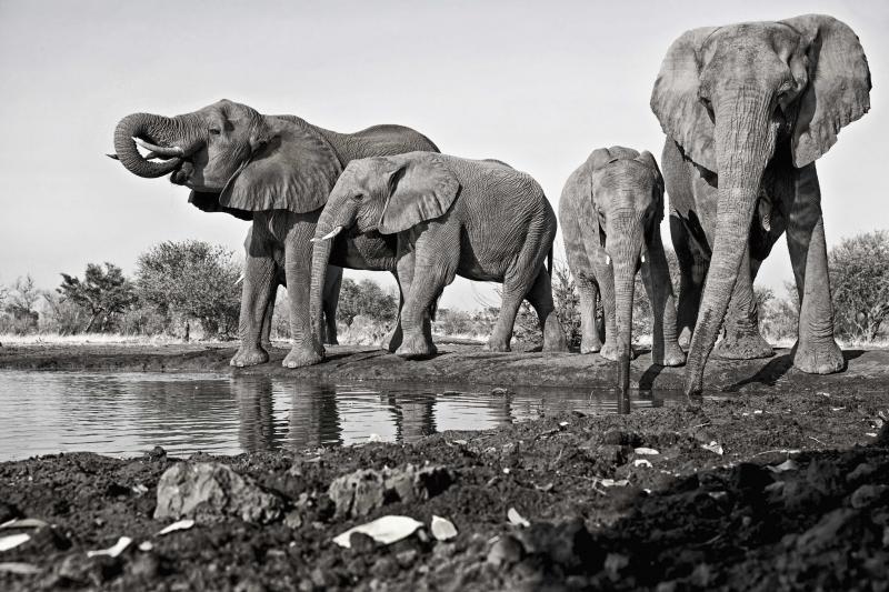 Mashatu Elephants 3