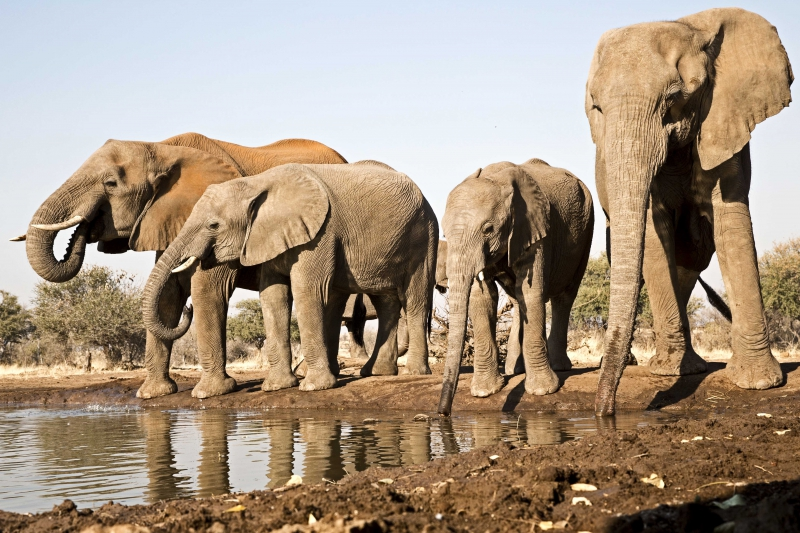 Mashatu Elephants 4