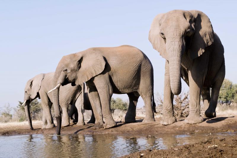 Mashatu Elephants 5