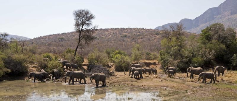 Mashatu Elephants 8
