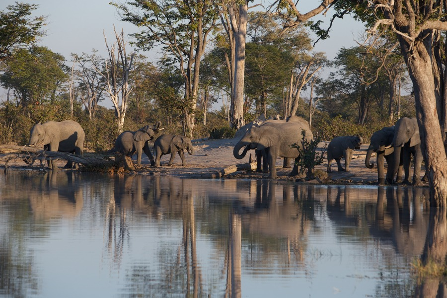 Bliss at the waterhole