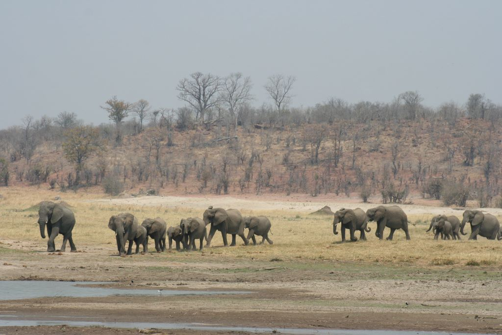 Elephant family near water