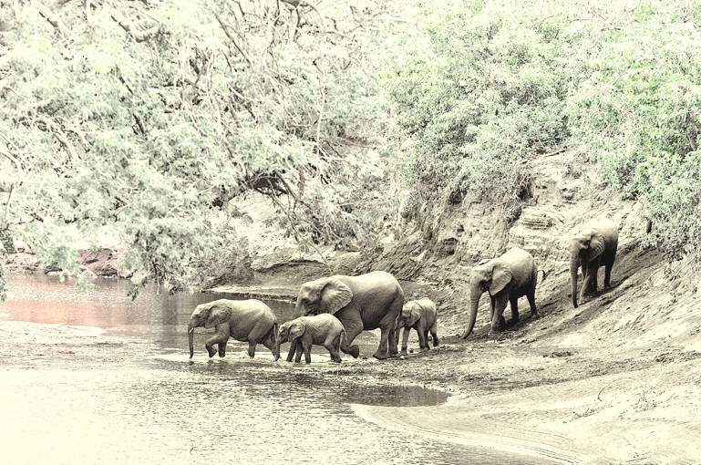 Elephant family crossing river