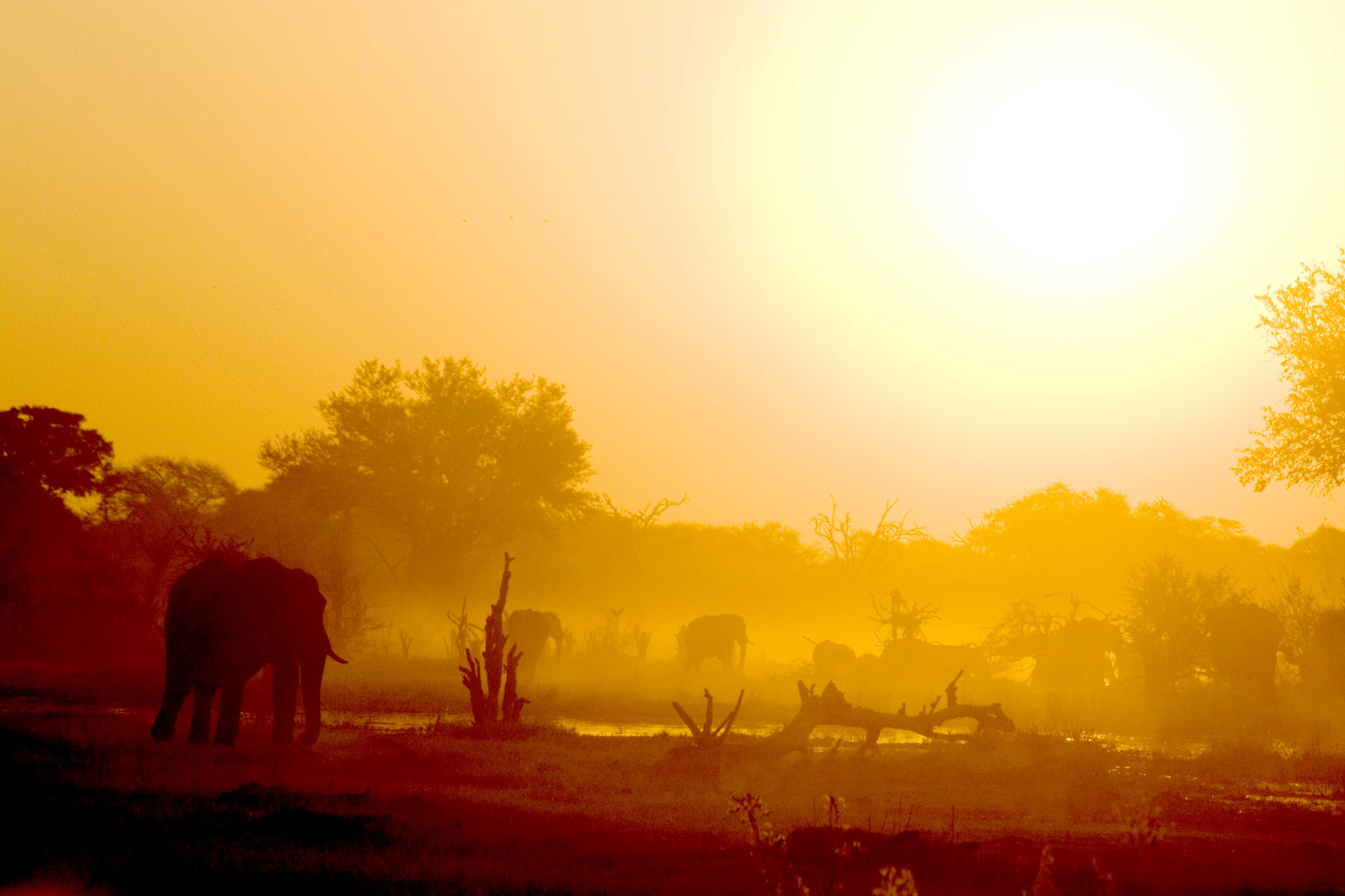 Elephants in Sunset, Moremi NP, Botswana