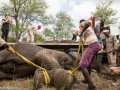 Elephant Rescue loading truck 1