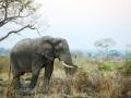 Elephant in landscape