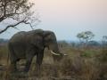 Elephant-Michael-Lorentz