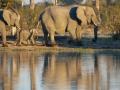 Elephant-march