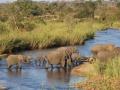 Elephant-river-crossing