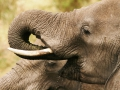 Elephants close up