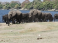 Herd at water hole