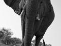 Mashatu Elephants 6