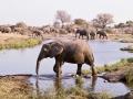 Mashatu Elephants 7