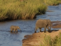Mother-and-baby-elephant
