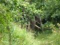 Elephant April 2008