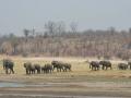 Elephant family near water