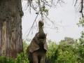 Ele bull and baobab, Ruaha NP