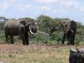 2 Elephants at gorra