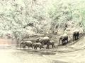 Elephant family crossing river