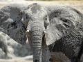 Elephant alert