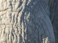 Elephant Bull Portrait, Sabi Sands, South Africa