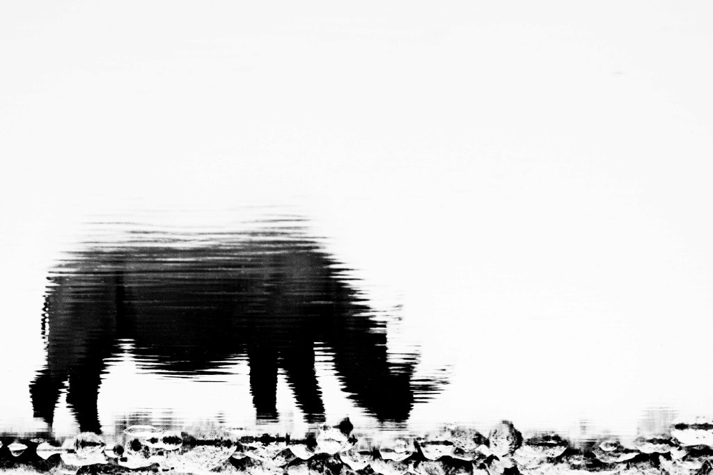 Rhino reflection 2
