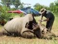 Rhino death
