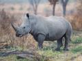 rhino Michael Lorentz