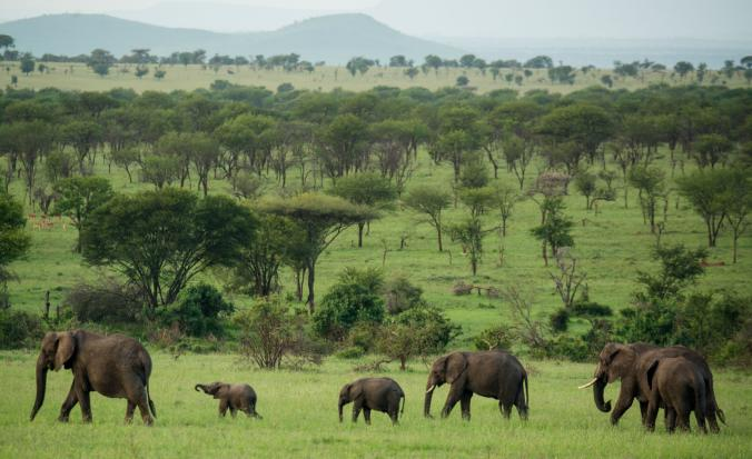 3793bf971 African Elephant Coalition renews call for global ivory trade ban ...
