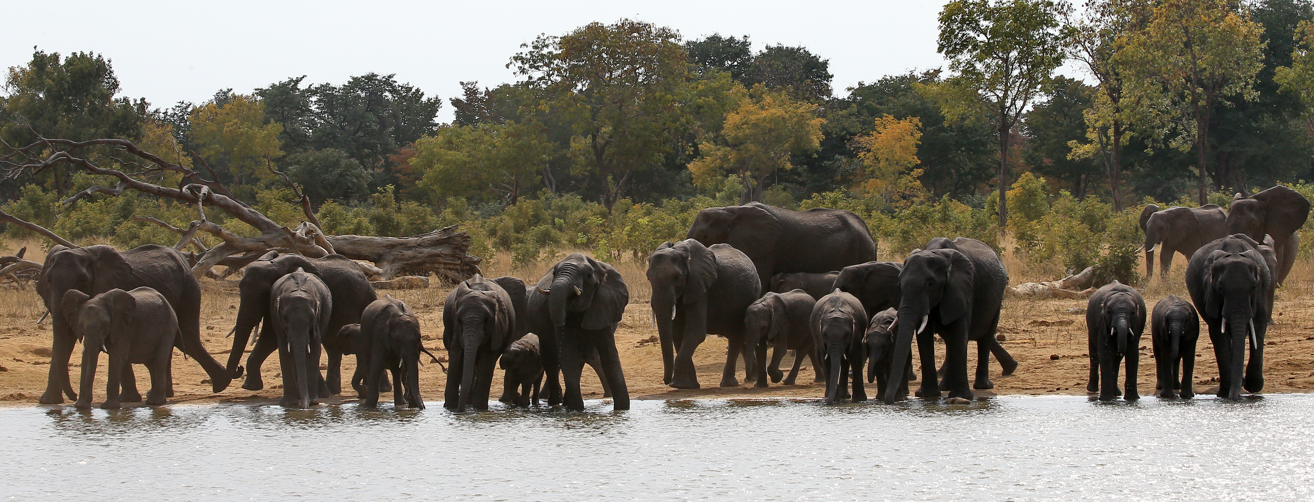 faqs proposed import of wild elephants from swaziland by u s zoos