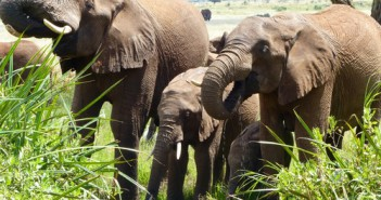 elephant family (photograph by Elly Pepper)-thumb-500xauto-18480
