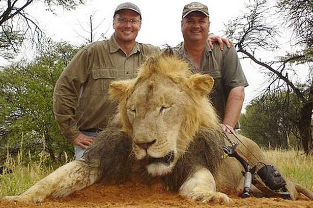 assessing the sustainability of african lion trophy hunting with