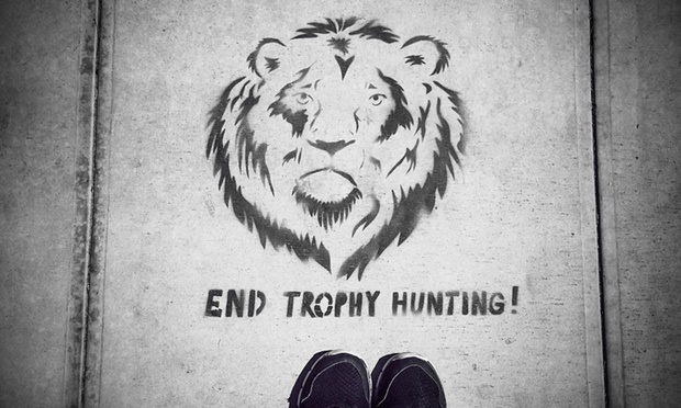 UK to ban import of lion trophies if hunting industry doesn't reform