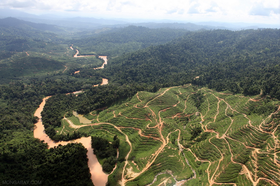 Africa S Forests Menaced By Palm Oil Rush Conservation