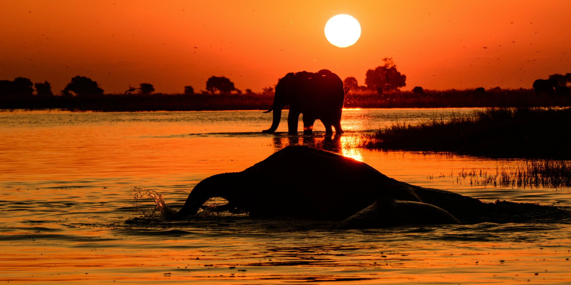 out of africa into tax havens conservation action trust