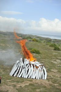 World Elephant Day mock ivory burn DON PINNOCK