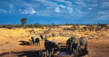A family group of elephants in Hwange national park in Zimbabwe. All African megafauna are facing rapid decline. Photograph: Alamy