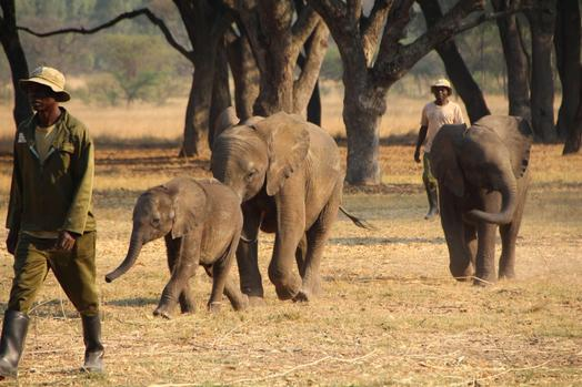 Confusion over Botswana's elephant population - Conservation