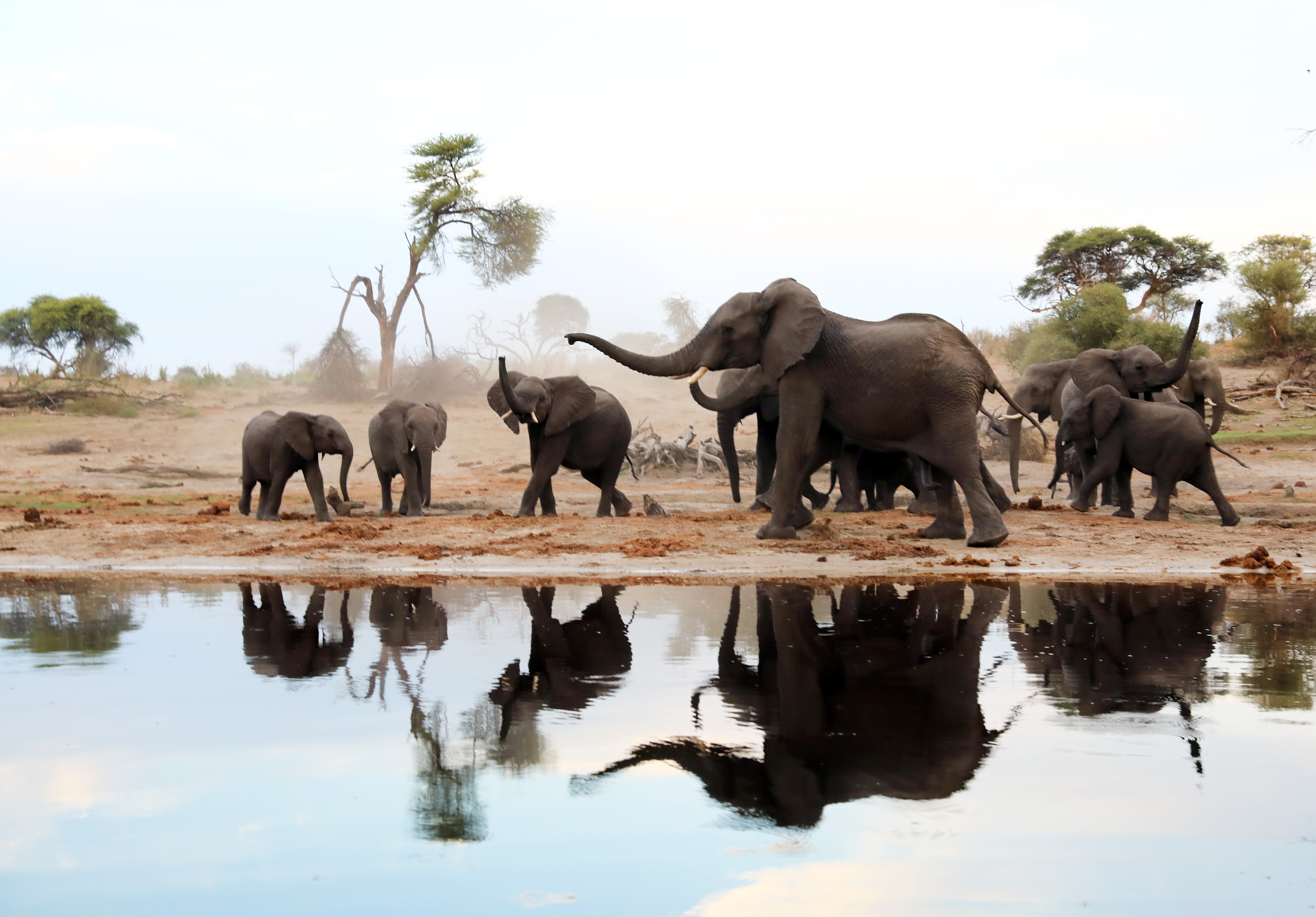 the national norms and standards for the management of elephants in